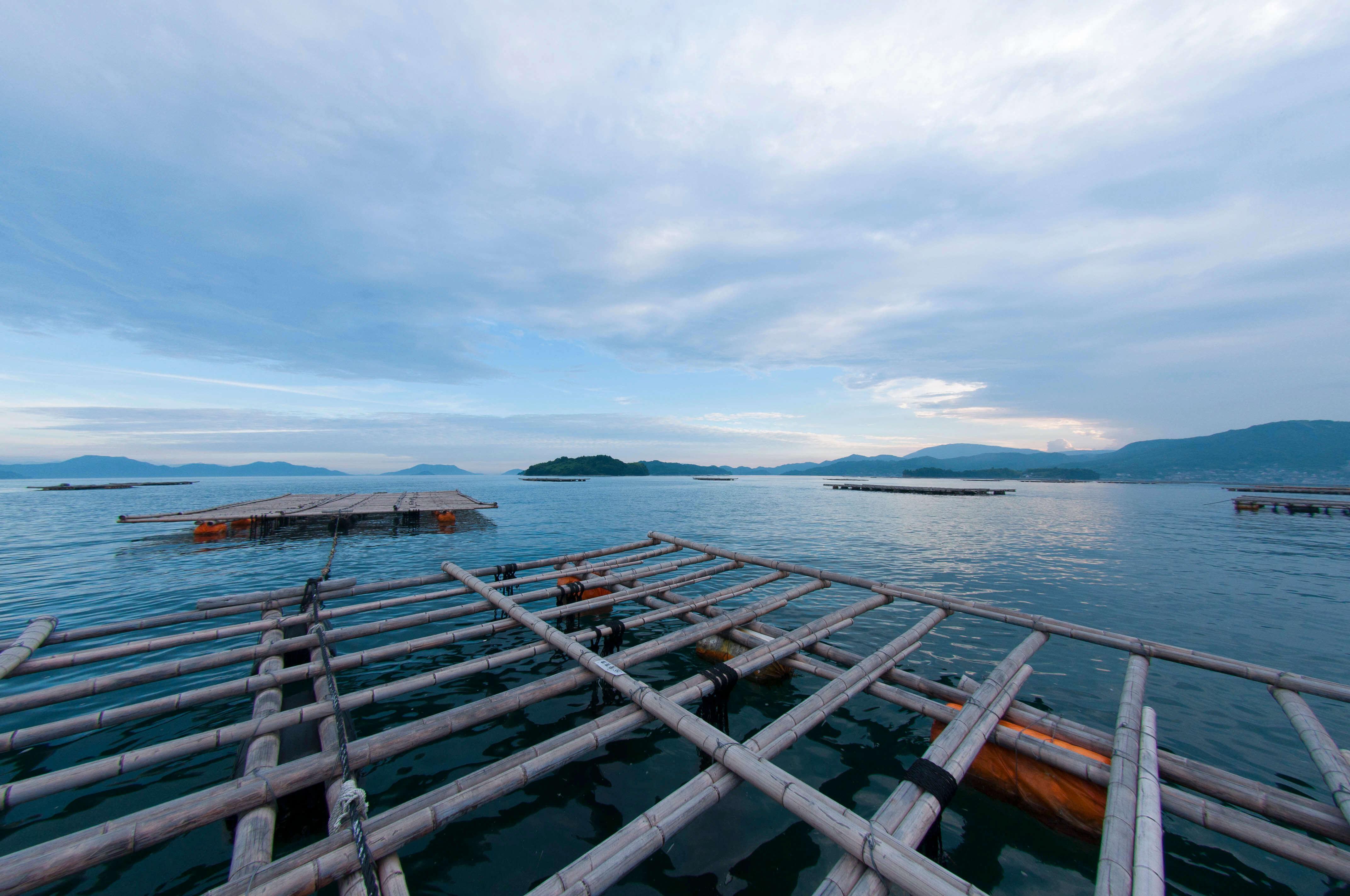 広島県安芸津町の牡蠣筏